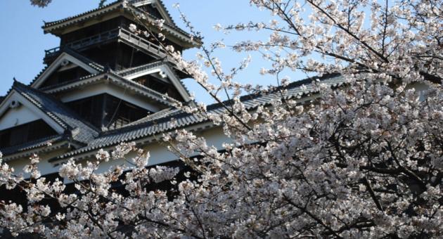 もうすぐお花見シーズン!熊本市内オススメお花見スポット