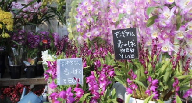 早春の風物詩 くまもと春の植木市(前編)